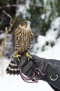 Kroschel Wildlife Center, Haines, Alaska2016© 2016 Deede Denton - Image 24368_0279