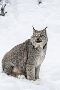 Kroschel Wildlife Center, Haines, Alaska2016© 2016 Deede Denton - Image 24368_0280