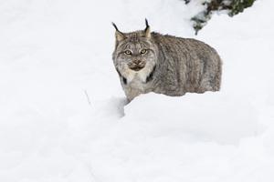 Kroschel Wildlife Center, Haines, Alaska2016© 2016 Deede Denton - Image 24368_0281
