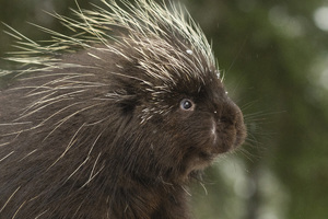 Kroschel Wildlife Center, Haines, Alaska2016© 2016 Deede Denton - Image 24368_0282