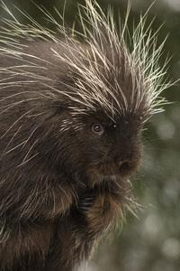 Kroschel Wildlife Center, Haines, Alaska2016© 2016 Deede Denton - Image 24368_0285