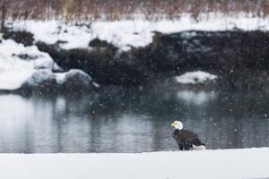 Alaska Chilkat Bald Eagle Preserve, Haines, Alaska2016© 2016 Deede Denton - Image 24368_0286