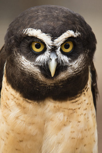 Carolina Raptor Center, Charlotte, North Carolina2017© 2017 Deede Denton - Image 24368_0295
