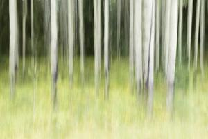 Banff National Park, Alberta, Canada2017© 2017 Deede Denton - Image 24368_0361