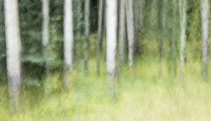 Banff National Park, Alberta, Canada2017© 2017 Deede Denton - Image 24368_0362