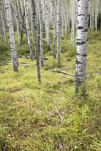 Jasper National Park, Alberta, Canada2017© 2017 Deede Denton - Image 24368_0392