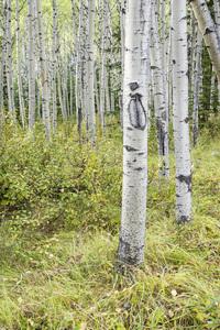 Jasper National Park, Alberta, Canada2017© 2017 Deede Denton - Image 24368_0393