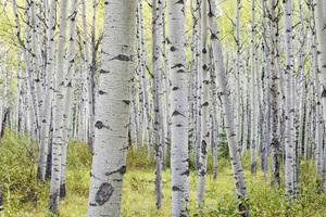 Jasper National Park, Alberta, Canada2017© 2017 Deede Denton - Image 24368_0395