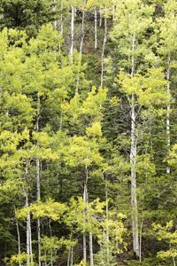 Jasper National Park, Alberta, Canada2017© 2017 Deede Denton - Image 24368_0398