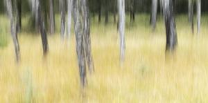 Jasper National Park, Alberta, Canada2017© 2017 Deede Denton - Image 24368_0399