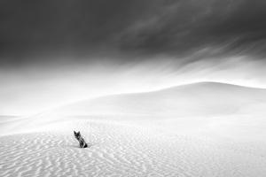 Desert in Transition (Dead Tree - United Arab Emirates)2017© 2017 Anthony Lamb - Image 24375_0008
