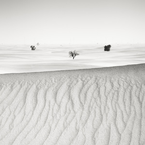 Desert in Transition (Distant - United Arab Emirates)2017© 2017 Anthony Lamb - Image 24375_0010