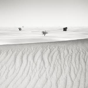 Desert in Transition (Distant - United Arab Emirates)2017© 2017 Anthony Lamb - Image 24375_0010
