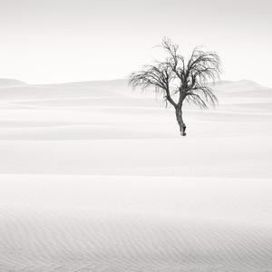 Desert in Transition (Opposite - United Arab Emirates)2017© 2017 Anthony Lamb - Image 24375_0034