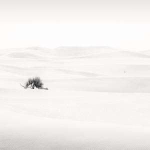 Desert in Transition (Pristine - United Arab Emirates)2017© 2017 Anthony Lamb - Image 24375_0038