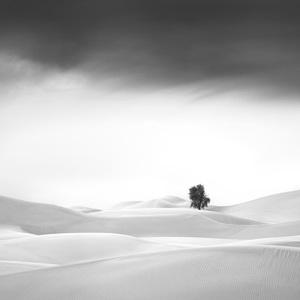 Desert in Transition (Serene - United Arab Emirates)2016© 2016 Anthony Lamb - Image 24375_0043
