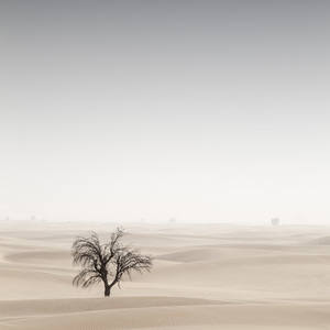 Desert in Transition (Signs of Life - United Arab Emirates)2017© 2017 Anthony Lamb - Image 24375_0047