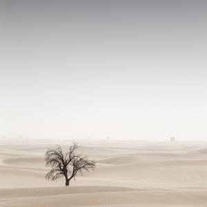 Desert in Transition (Signs of Life - United Arab Emirates)2017© 2017 Anthony Lamb - Image 24375_0047