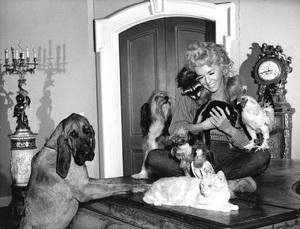 """""""The Beverly Hillbillies""""Donna Douglascirca 1966**I.V. - Image 3265_0132"""