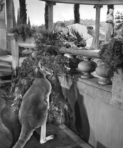 """The Beverly Hillbillies""Irene Ryancirca 1966**I.V. - Image 3265_0134"