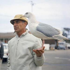 "Bird trainer Ray Berwick on ""The Birds"" movie set at Bodega Bay in California1961 © 1978 John Bressie - Image 3302_0056"