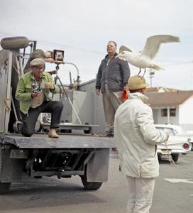 "Bird trainer Ray Berwick on ""The Birds"" movie set at Bodega Bay in California1961 © 1978 John Bressie - Image 3302_0057"