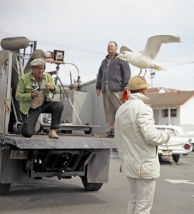 "Bird trainer Ray Berwick on ""The Birds"" movie set at Bodega Bay in California1961 © 1978 John Bressie - Image 3302_0057"