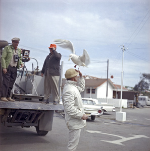 "Bird trainer Ray Berwick on ""The Birds"" movie set at Bodega Bay in California1961 © 1978 John Bressie - Image 3302_0058"