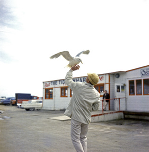 "Bird trainer Ray Berwick on ""The Birds"" movie set at Bodega Bay in California1961 © 1978 John Bressie - Image 3302_0059"