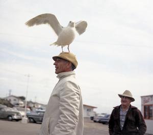 "Bird trainer Ray Berwick on ""The Birds"" movie set at Bodega Bay in California1961 © 1978 John Bressie - Image 3302_0061"