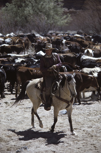 """The Cowboys""John Wayne1971© 1978 David Sutton - Image 3370_0612"