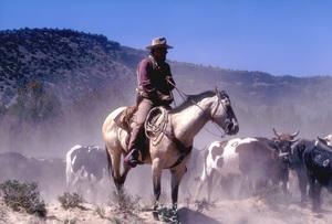 """""""The Cowboys""""John Wayne1972 Warner Brothers © 1978 Bob Willoughby - Image 3370_0661"""