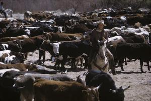 """The Cowboys""John Wayne1972 Warner Brothers© 1978 David Sutton - Image 3370_0686"