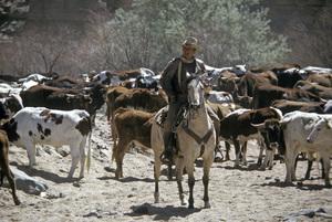 """The Cowboys""John Wayne1972 Warner Brothers © 1978 David Sutton - Image 3370_0687"