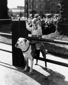 """""""Our Gang""""Spanky and Pete the Dogc. 1932Hal Roach Productions**R.C. - Image 3636_0030"""