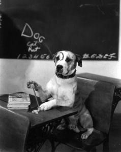 """""""Our Gang""""Pete the Dogc. 1935Hal Roach Productions**I.V. - Image 3636_0070"""