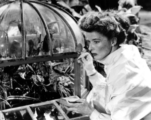 Suddenly Last SummerKatharine Hepburn1959 Columbia / **I.V. - Image 3756_0036