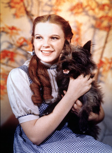 """""""The Wizard of Oz"""" Judy Garland, Toto 1939 MGM - Image 3823_0032"""