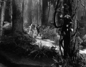 """The Wizard of Oz""Jack Haley, Judy Garland, Ray Bolger1939 MGM - Image 3823_0161"