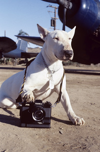 Animals (a dog with a camera)1980© 1980 Bud Gray - Image 3843_0015