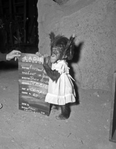 """""""Lost in Space"""" (Season 1)Debbie the chimp1965Photo by Gabi Rona© 2015 Legend Pictures, LLC - Image 5095_0261"""