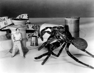 """The Incredible Shrinking Man""Grant Williams1957 Universal - Image 5350_0002"