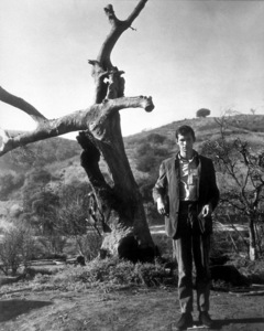"""Psycho,""Anthony Perkins. © 1960 Paramount - Image 5408_0007"
