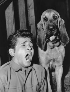 """Bonanza""Michael Landon in ""Hound Dog"" 1965**I.V. - Image 5424_52"