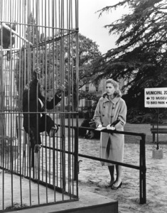 """""""Bewitched""""Elizabeth Montgomeryc. 1967 ABC**I.V. - Image 55406_0091"""