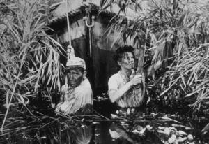 """The African Queen""Humphrey Bogart and Katharine Hepburn1951 UAMPTV - Image 5636_0005"