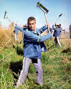 """Cool Hand Luke""Paul Newman1967 Warner Brothers**I.V. - Image 5788_0005"