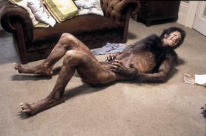 """American Werewolf In London, An""David Naughton1981 Universal © 1981 Bob Willoughby - Image 6355_0021"
