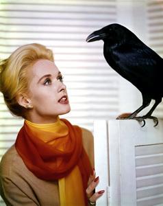 "Tippi Hedrenpublicity still from the movie ""The Birds""1962Photo by Coburn Sr.**I.V. - Image 7507_0033"
