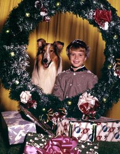 """Lassie""Jon Provost, Lassiecirca 1958Photo by Gabi Rona - Image 7553_0004"